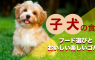 子犬の食事やフード選びのポイント、元気に育つ食育のススメ